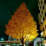 いちょうの樹 by LX3