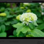Flickr連携の画像をLightbox 2で拡大表示させるプラグイン