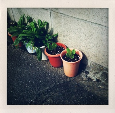ShakeItPhoto by iPhone