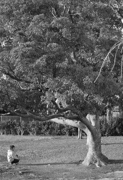 AF-S DX NIKKOR 35mm F1.8G 木と子供